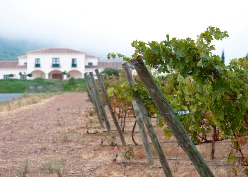 La ruta del vino Ribera del Guadiana crea la Primavera Enogastronómica.