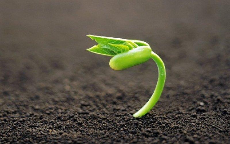 Una semilla también entra en crisis para germinar.