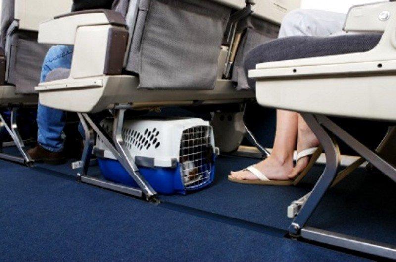 Nuevas normas europeas de transporte para los viajes con mascota