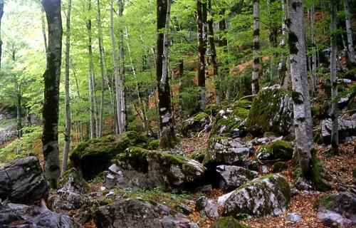 Es prioritaria la conservación del entorno sobre cualquier actividad