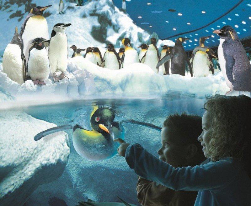 El área de pingüinos de Loro Parque, Tenerife.