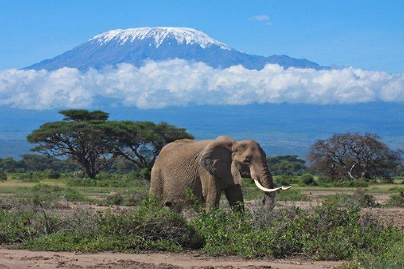 La sabana africana, con el Kilimanjaro al fondo. #shu#