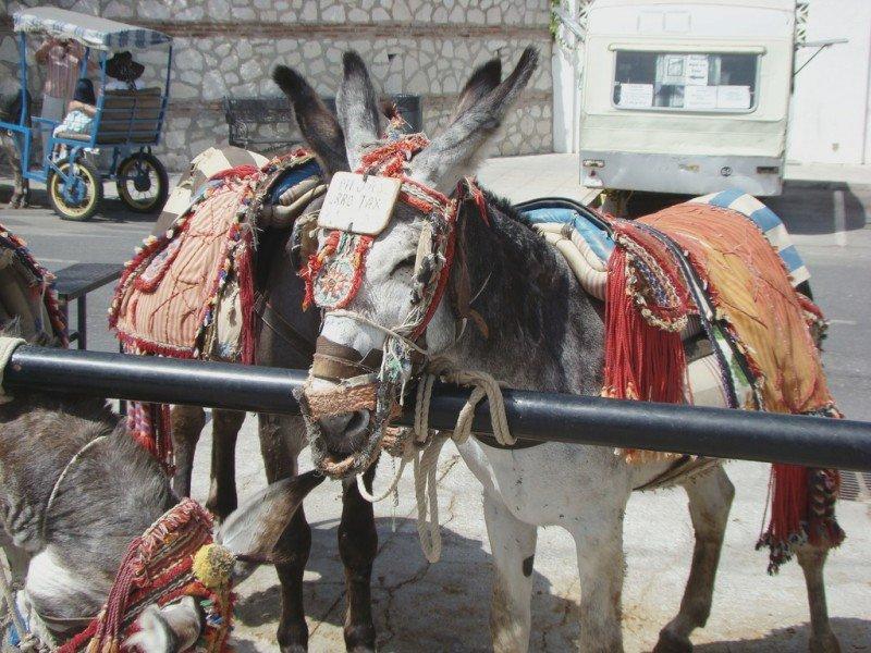 El burro-taxi de Midas, Málaga.