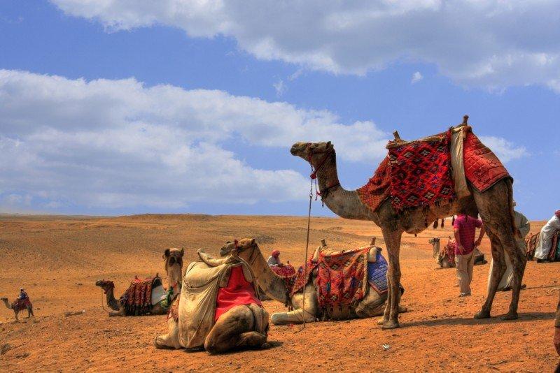 Los turoperadores nórdicos han abandonado Egipto para lo que queda de año. #shu#.