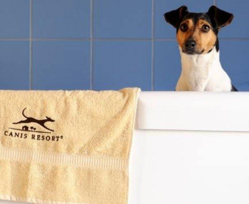 En la foto, imagen de Canis Resort, un hotel de lujo para perros ubicado en Freising, Alemania.