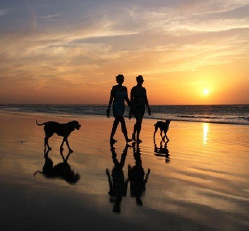 Uno de cada cuatro hogares españoles convive con un animal de compañía.
