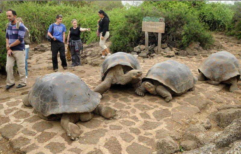 Isla Galápagos.