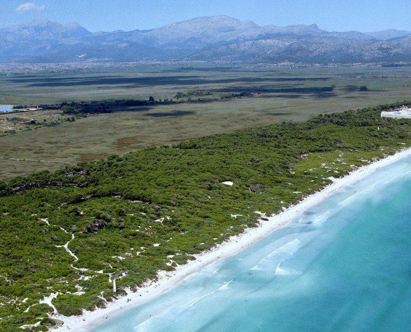 La Playa de Muro recibe la certificación EMAS