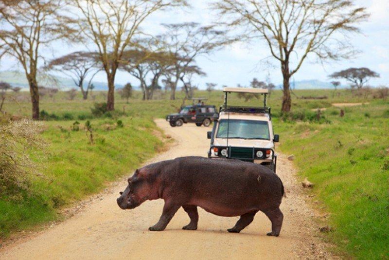 Los safaris fotográficos son uno de los grandes atractivos de Kenia, Uganda y Ruanda. #shu#