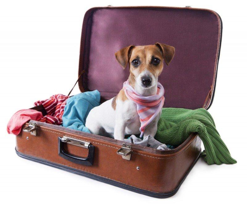 Los perros también tendrán que pagar tasa turística por alojarse en los hoteles berlineses. #shu#