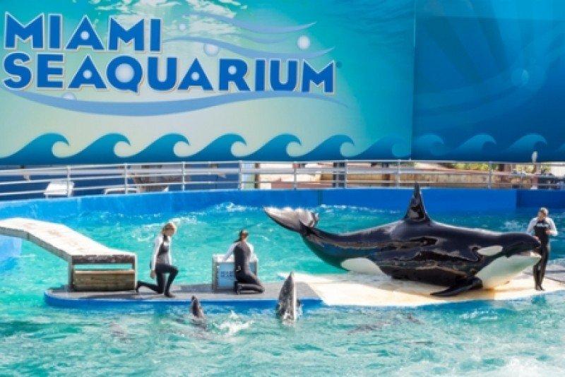 El parque Miami Seaquarium recibe medio millón de visitantes cada año. #shu#