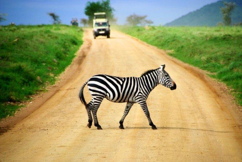 Los safaris son uno de los principales reclamos turísticos de África. #shu#