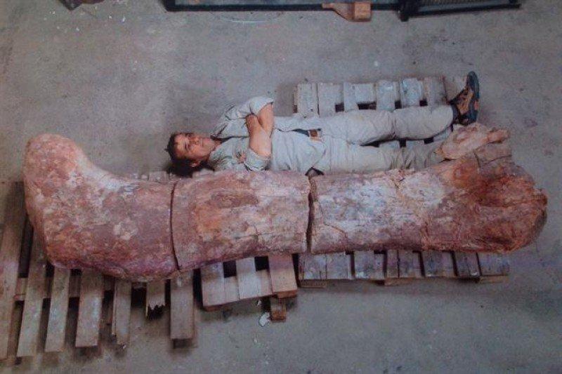 Femur del dinosaurio encontrado en Chubut. (Foto: Museo Egidio Feruglio)