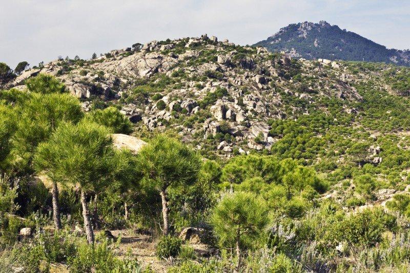 La Comunidad cuenta con 11 espacios naturales protegidos. #shu#.