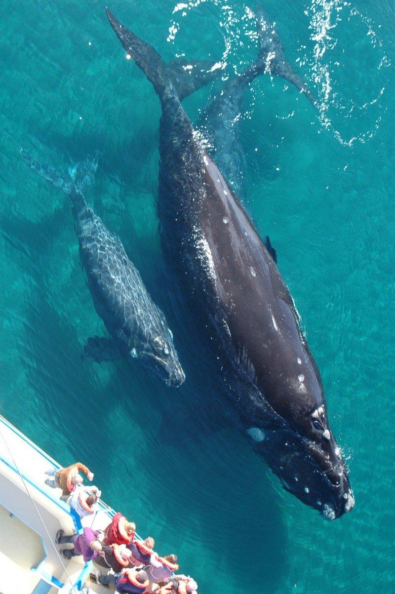 Turistas avistando ballenas en Argentina.