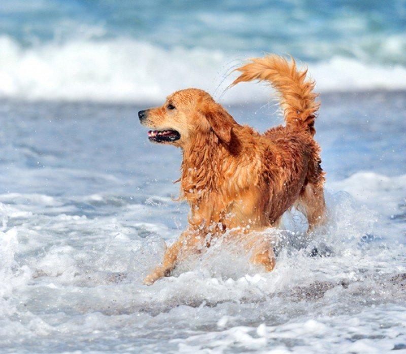 Solo 40 playas de España admiten perros. #shu#