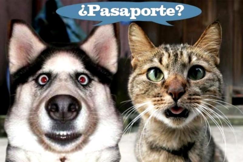 Perros, gatos y hurones, obligatorio el pasaporte para viajar (Foto: web Imagen Poblana).