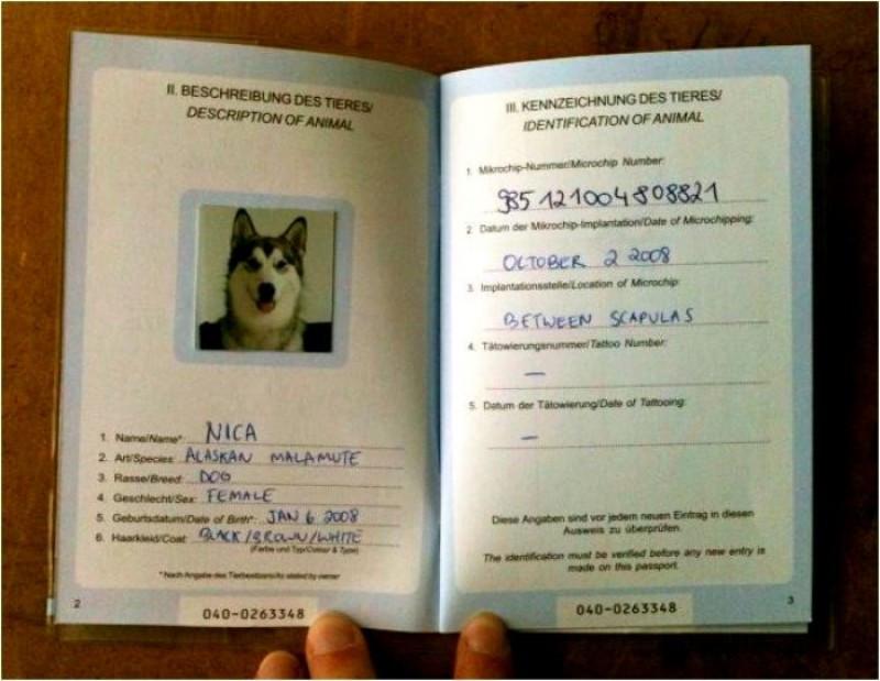 Si ya se tiene un pasaporte para las mascotas, no es necesario obtener el nuevo.