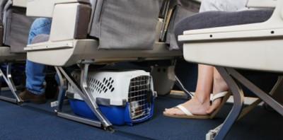 Pasajeros de Aerolíneas Argentinas podrán viajar con pequeñas mascotas a bordo