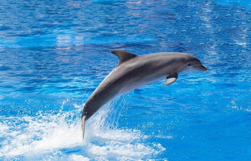 Uno de los delfines del parque.