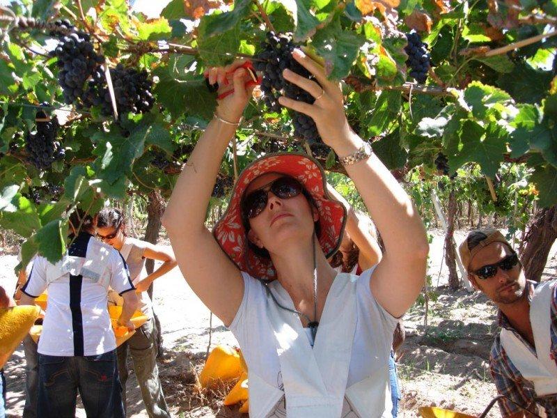 Más de 352.000 turistas visitaron la provincia y recorrieron viñedos y bodegas.