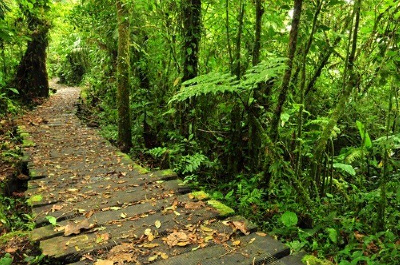 La reserva de Monteverde es uno de los lugares que Costa Rica muestra como ejemplo de su gestión sostenible. #shu#