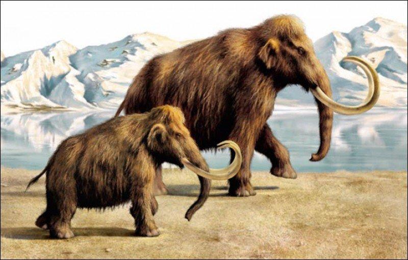 Casi 4.000 años después de su extinción, los mamuts podrían volver a caminar sobre la Tierra en una reserva natural en Siberia.