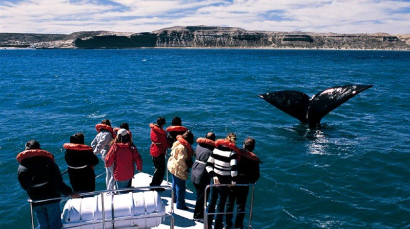 El avistaje de ballenas convoca a 100.000 turistas al año.