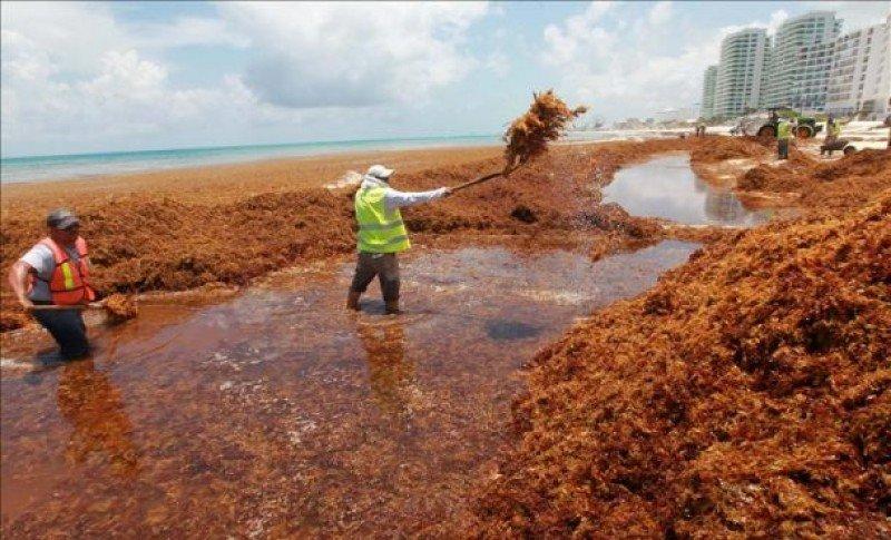 Las playas de Cancún sufren desde hace días la invasión de algas. Foto: Telemundo.