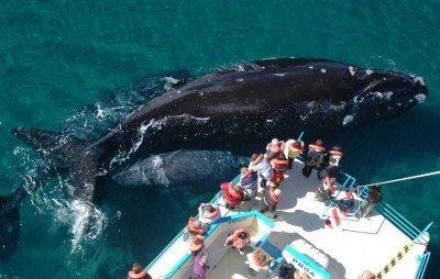 El avistaje de ballenas concetra turismo en octubre y noviembre.