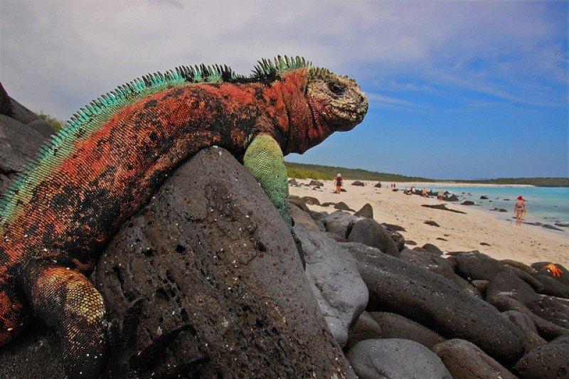 Galápagos es el destino más distintivo del país.