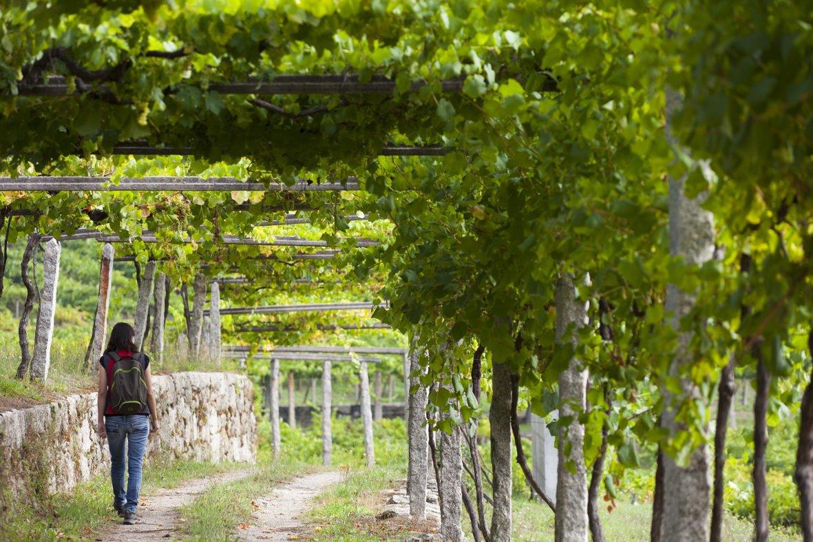 La edad media del enoturistas está entre 36 y 45 años. (FOTO: Ruta do Viño Rías Baixas.  X. Lobato)