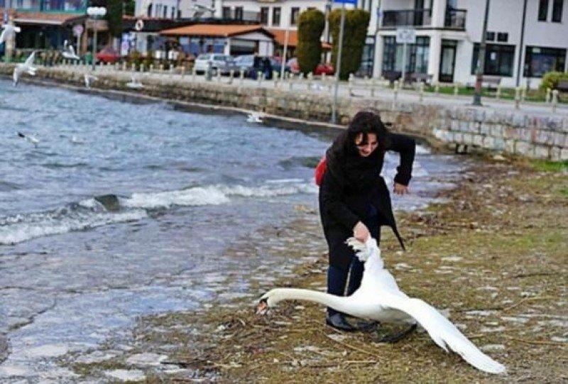 La turista que cogió a un cisne en el lago de Ocrida, entre Macedonia y Albania (N.Batev)