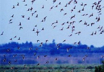 El Parque Nacional de Doñana, entre los espacios amenazados.