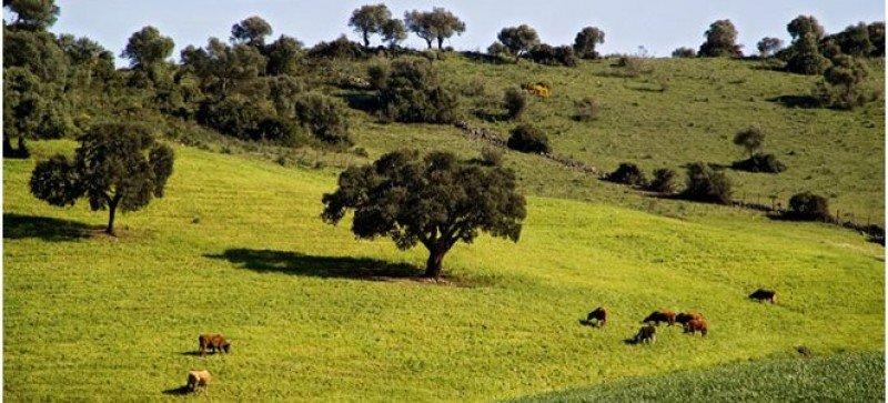 Andalucía concentra el 42,5% de los espacios acreditados.