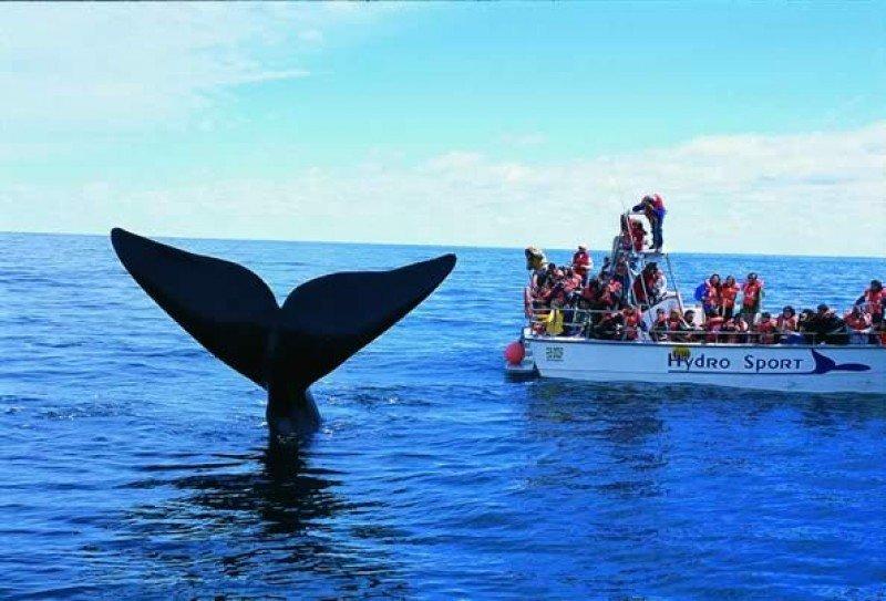 El avistaje de ballenas es uno de los principales productos turísticos de la provincia.