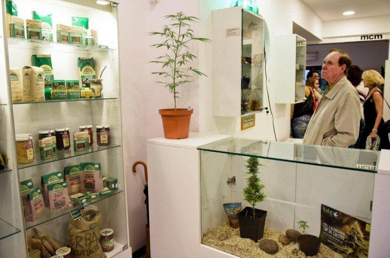 El experto estadounidense Ed Rosenthal, autor de una docena de libros sobre la marihuana, respaldó la inauguración con su presencia.
