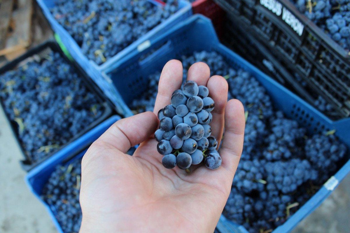 Sierra de Francia se convierte en la ruta número 27 del club de producto Rutas del Vino de España.