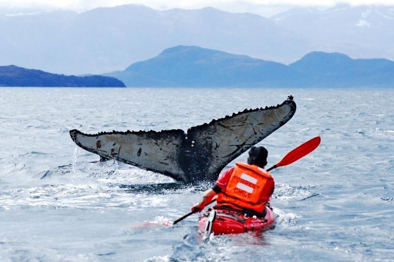 Webinar: Naturaleza y aventura en Chile