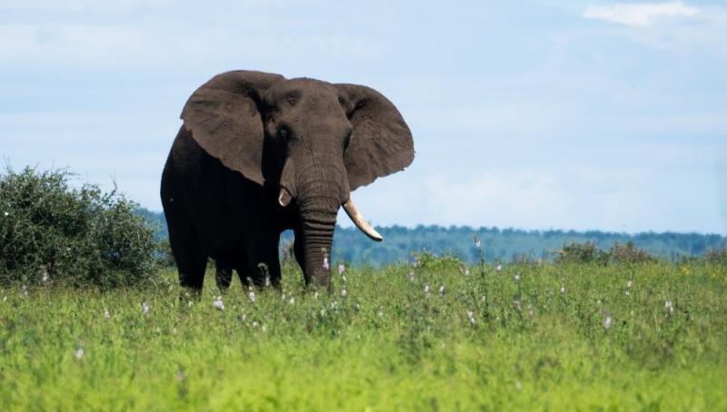 Un elefante mata a un turista español en Etiopía