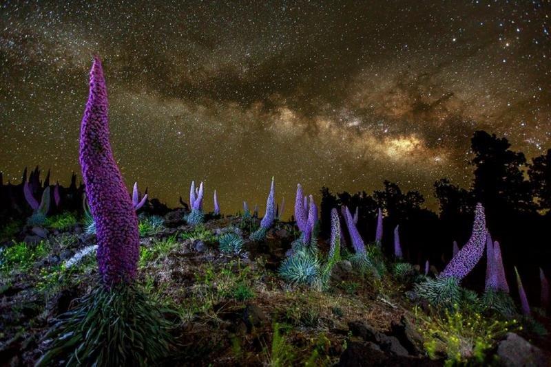 Los cielos de La Palma están declarados 'Reserva Starlight'