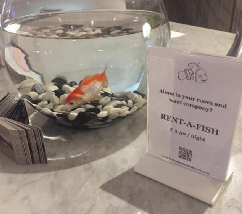 Un hotel belga alquila peces a sus clientes para que no se sientan solos.
