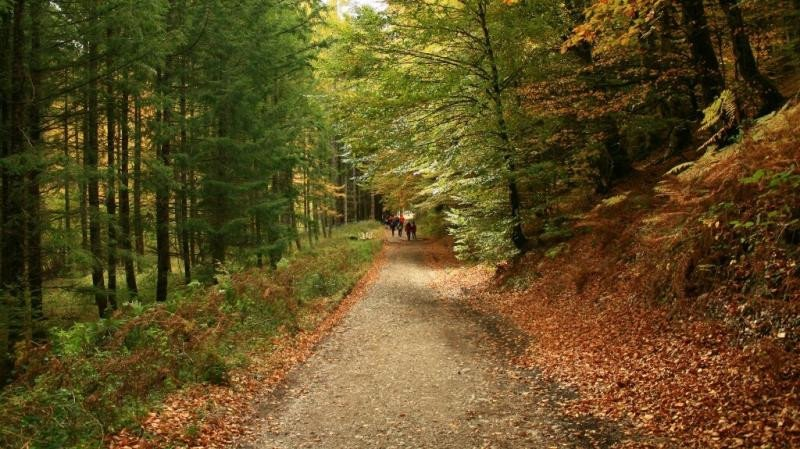 Selva de Irati (Navarra).