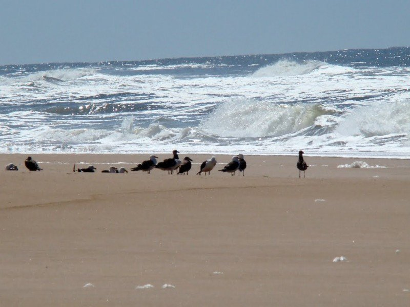 Playa de Rocha. Foto: Mapio