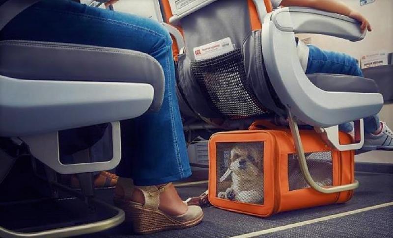 Traslado de mascotas en la aerolínea brasileña GOL (Foto: Viagem).