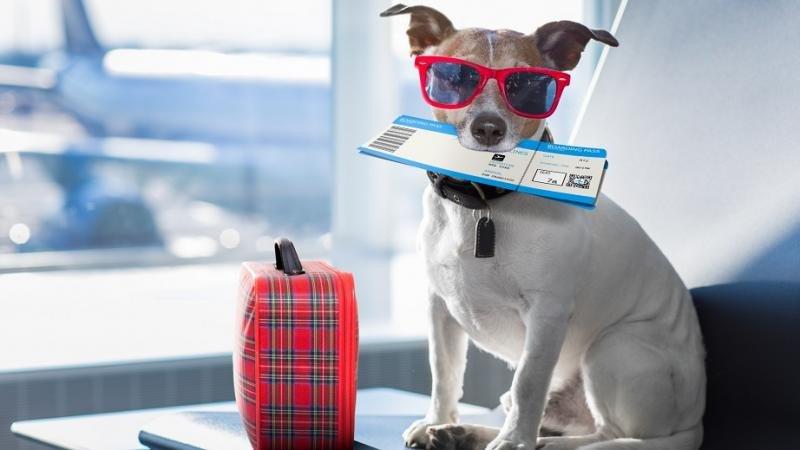 Mascotas en avión: IATA lanza un programa global (Foto: istock).