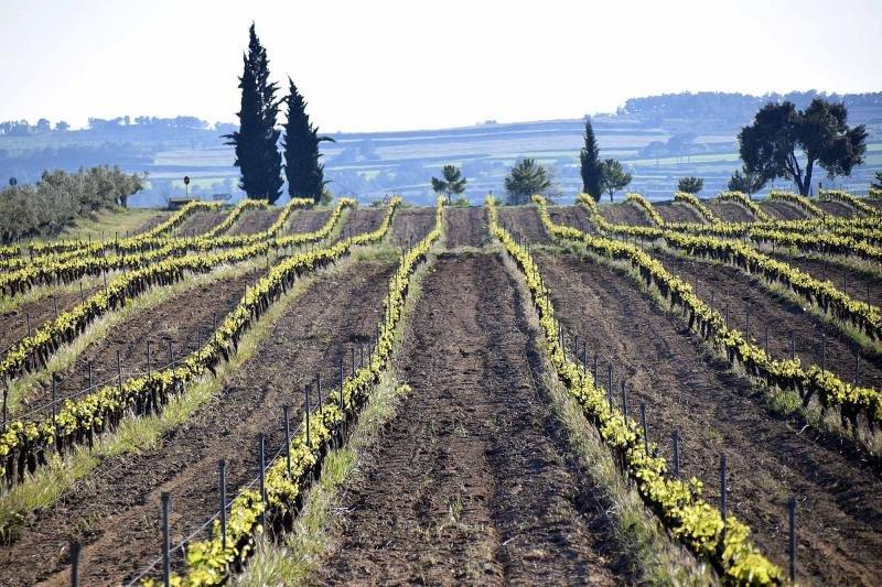 La primera ruta del vino inteligente se pone en marcha. Imagen: DOP Valencia.