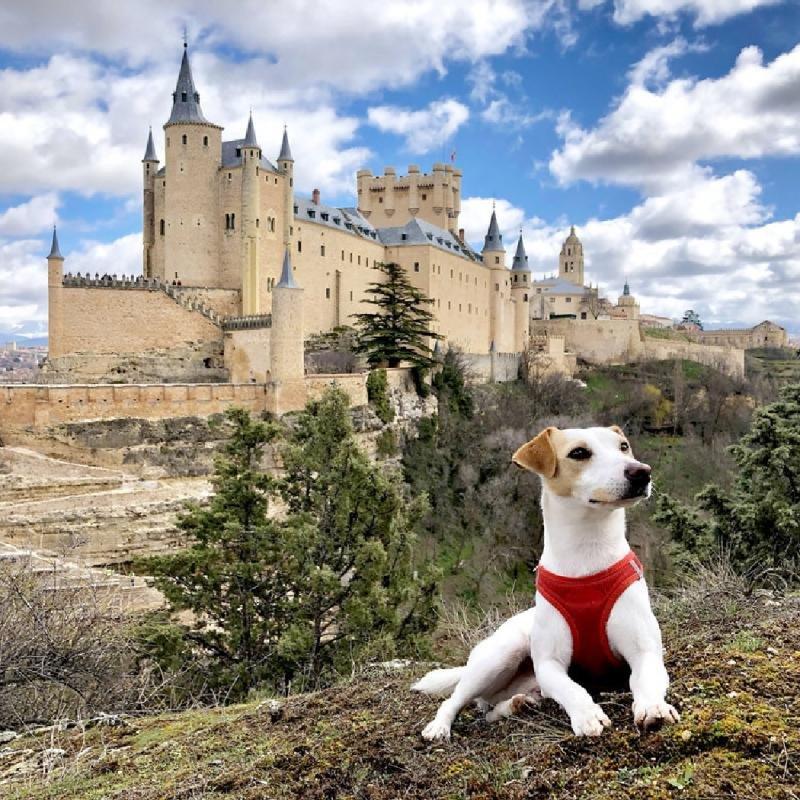 Pipper conociendo Segovia, con el Alcázar de fondo.
