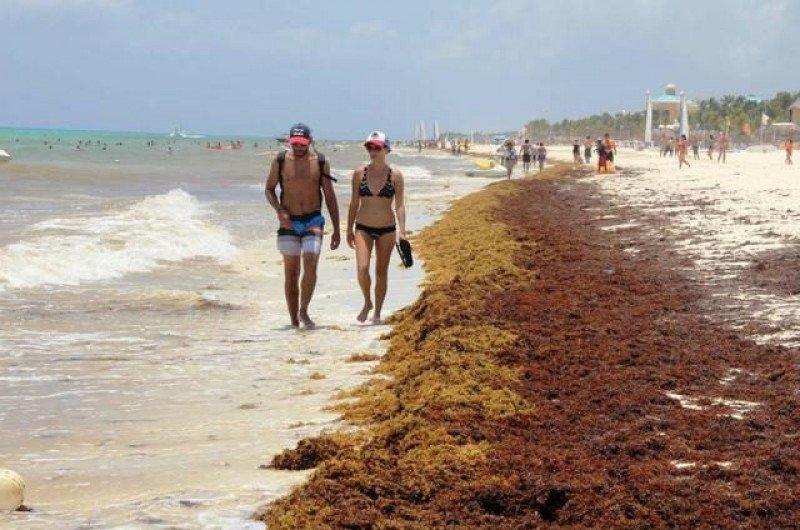 Las playas del sur de México enfrentan una nueva crisis de algas a las puertas de las vacaciones de verano. Foto: Quintana Roo Hoy