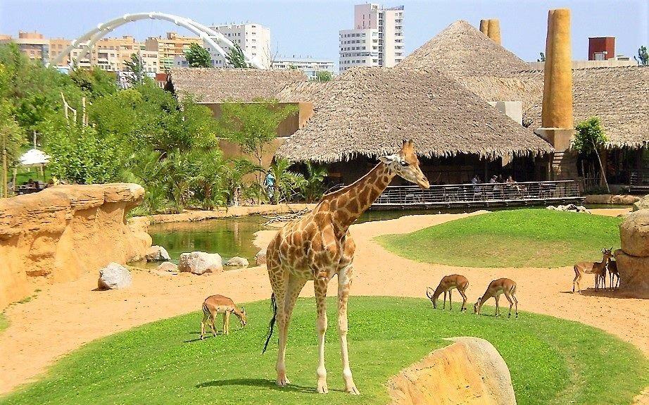 Imagen Loro Parque, el zoológico número 1 del mundo por segundo año consecutivo